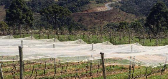 vinicolas de santa catarina whats on anocultura 570x270 - Vinícolas de Santa Catarina