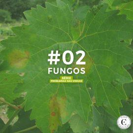 02 Fungos 270x270 - Série: Problemas nas Vinhas [ FUNGOS ]