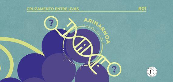 02 Cruzamento entre uvas arinarnoa capa 570x270 - Cruzamento entre Uvas: Arinarnoa