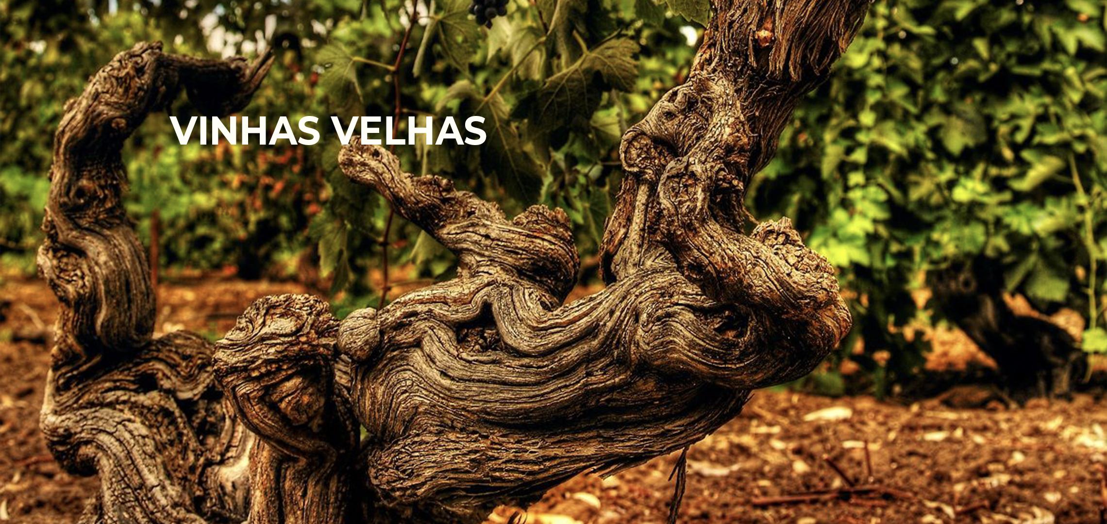 Vinhas velhas produzem vinhos de melhor qualidade?