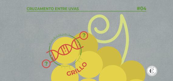 04 Cruzamento Grillo capa 570x270 - Cruzamento entre Uvas: Grillo