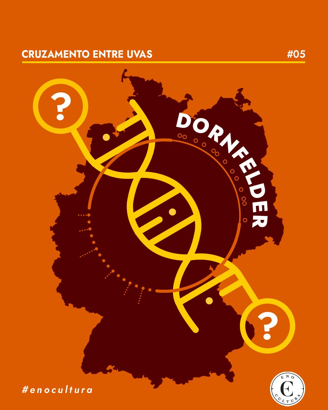 Cruzamento entre Uvas: Dornfelder
